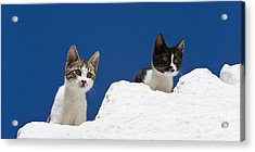 Kittens On A Greek Island Acrylic Print