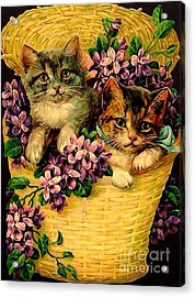Kittens With Violets Victorian Print Acrylic Print