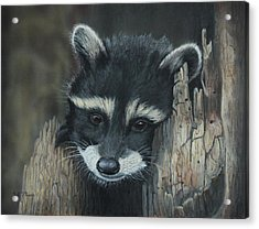Kit...the Baby Raccoon Acrylic Print