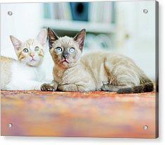 Kitties Sisters Acrylic Print by Cindy Loughridge