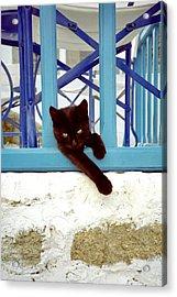 Kitty And The Blue Rail Acrylic Print