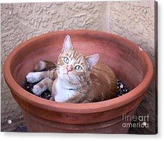Kitty Bulbs Acrylic Print