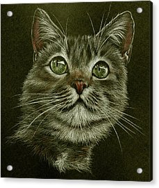 Kitty Cat Acrylic Print by Heidi Kriel