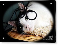 Kitty Cuteness Soft And Sweet Acrylic Print by Andee Design
