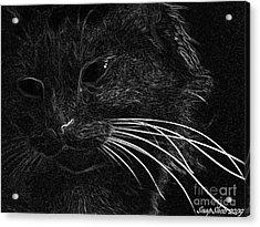 Kitty Acrylic Print by Emily Kelley