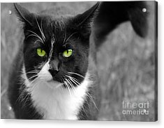 Acrylic Print featuring the photograph Kitty Fallowing by Lila Fisher-Wenzel