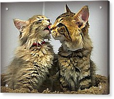 Kitty Kisses Acrylic Print