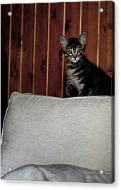 Acrylic Print featuring the photograph Kitty by Laura Melis