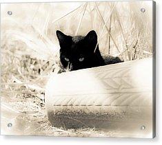 Kitty Stalks In Sepia Acrylic Print