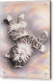 Kitty Acrylic Print by Valentina Vassilieva