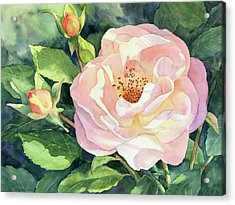 Knockout Rose And Buds Acrylic Print