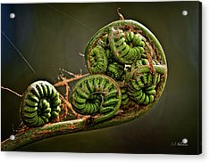 Knotted Acrylic Print by Christopher Holmes