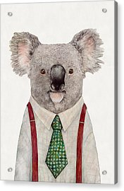 Koala Acrylic Print by Animal Crew