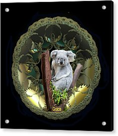 Koala Acrylic Print by Julie Grace