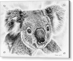 Koala Newport Bridge Gloria Acrylic Print by Remrov