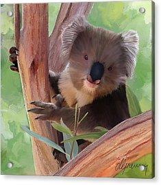 Koala  Painting Acrylic Print by Michael Greenaway
