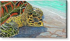 Kohilo Acrylic Print