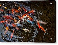Koi 4 Acrylic Print