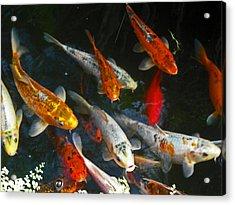 Koi Fish IIi Acrylic Print by Elizabeth Hoskinson