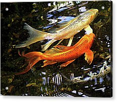 Koi Fish Swim In Synch Acrylic Print