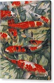 Koi Karp Acrylic Print by Gareth Lloyd Ball