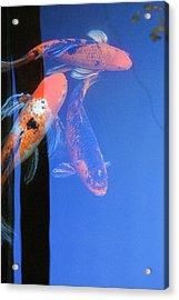 Koi Vi  Blue Acrylic Print
