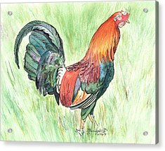 Kokee Rooster Acrylic Print by Marionette Taboniar