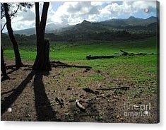 Koki Pasture Acrylic Print