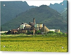 Koloa Sugar Mill Acrylic Print by Roger Mullenhour
