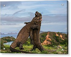 Komodo Island Acrylic Print