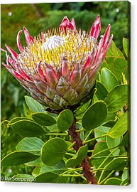 Kula Breeze Acrylic Print