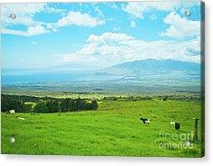 Kula Upcountry Maui Hawaii Acrylic Print by Sharon Mau