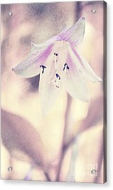 La Belleza Acrylic Print by Angela Doelling AD DESIGN Photo and PhotoArt