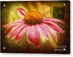 La Fleur Acrylic Print by Angela Doelling AD DESIGN Photo and PhotoArt