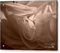 Acrylic Print featuring the photograph La Vie En Rose by Danica Radman