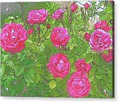 La Vie En Roses Acrylic Print by Jen White
