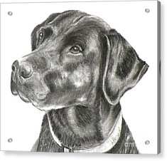 Lab Charcoal Drawing Acrylic Print
