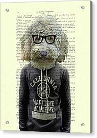 Labradoodle Dog Portrait Art Acrylic Print