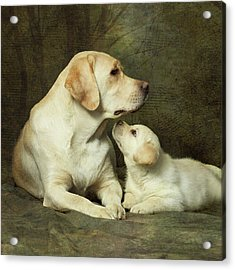 Labrador Dog Breed With Her Puppy Acrylic Print by Sergey Ryumin