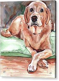 Labrador Retreiver Yellow Acrylic Print