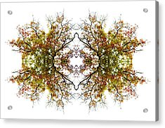 Lace Acrylic Print by Debra and Dave Vanderlaan