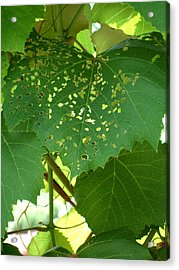 Lace In The Vines Acrylic Print by Mindy Newman