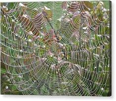 Lace Acrylic Print by Linda Raphael