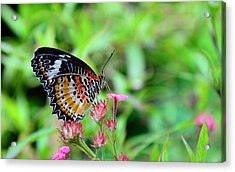 Acrylic Print featuring the photograph Lace Wing Butterfly by Corinne Rhode
