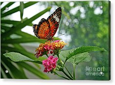Lacewing Butterfly Acrylic Print