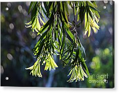 Lacey Leaves Acrylic Print