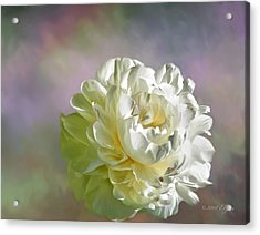 Lacy Acrylic Print by Elzire S