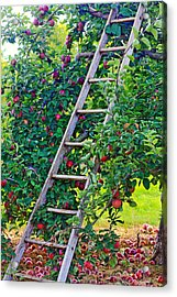 Ladder To The Top Acrylic Print