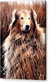 Laddie In Charge Acrylic Print by Ellen Lerner ODonnell