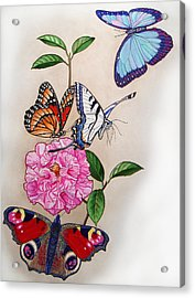 Ladies Of The Camellia Acrylic Print by Vlasta Smola
